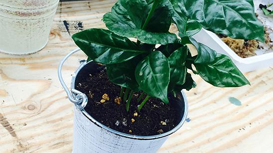 いらなくなったバケツを植物鉢に!〈西森家〉
