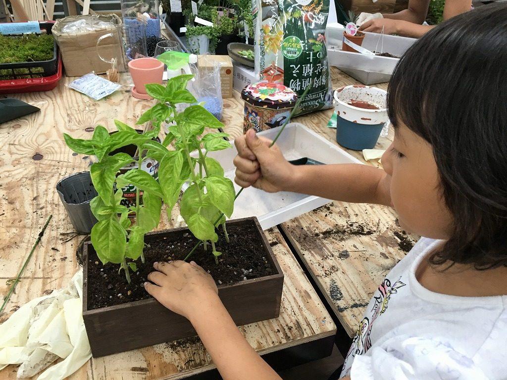 木箱をリメイクして植物鉢に!バジルを植えました!
