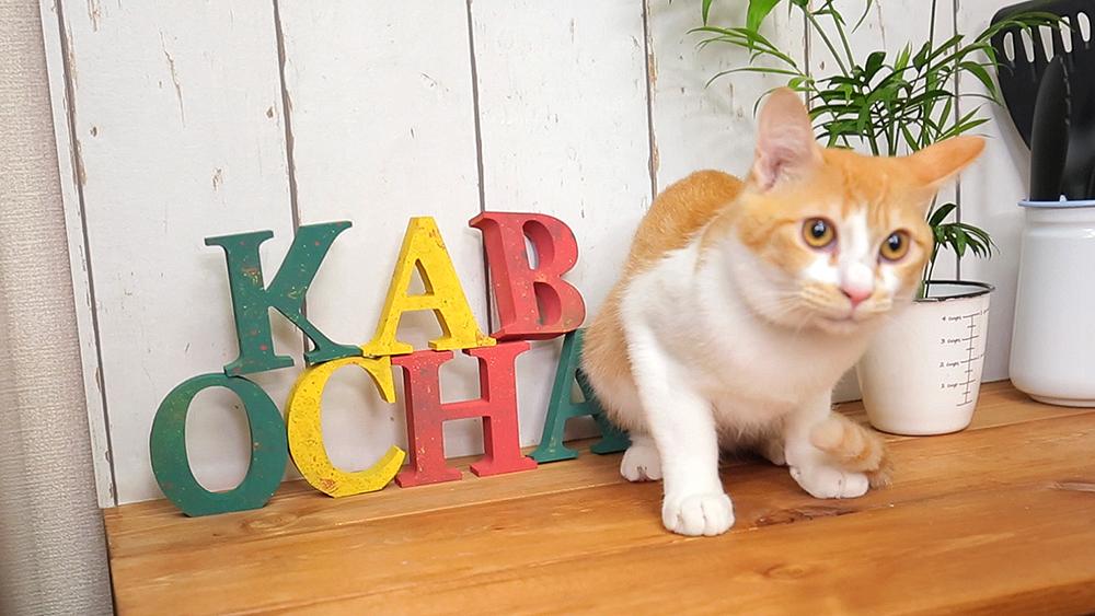 キッチンDIY⑤簡単で面白い!小物をカラースプレーでリメイク!〈武田家〉
