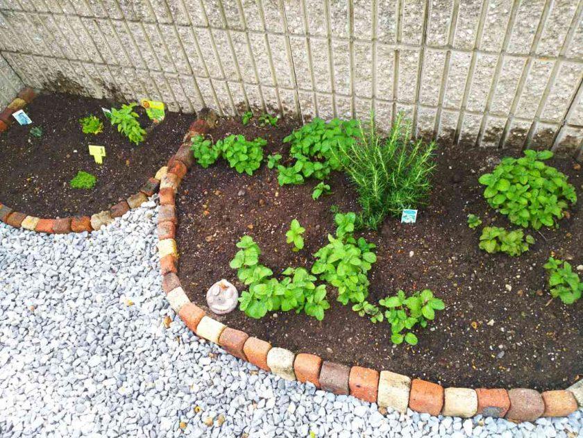 お庭をDIY①花壇にハーブを植えてみました♪〈坂本家〉