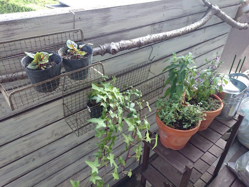 BBQ用焼き網をリメイク!植物用ハンギングバスケットできた!〈小松家〉