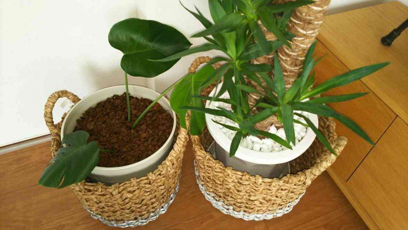 室内の観葉植物鉢にバークチップを。〈坂本家〉