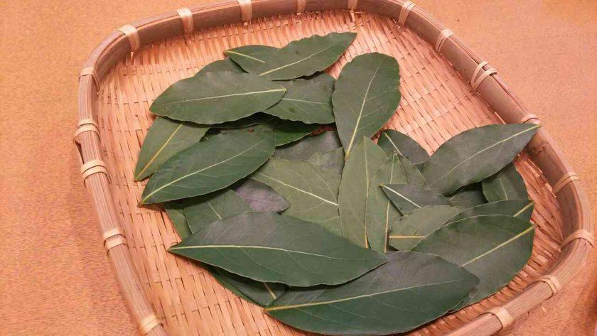 月桂樹の剪定と害虫駆除。葉で乾燥ローリエを作る〈坂本家〉