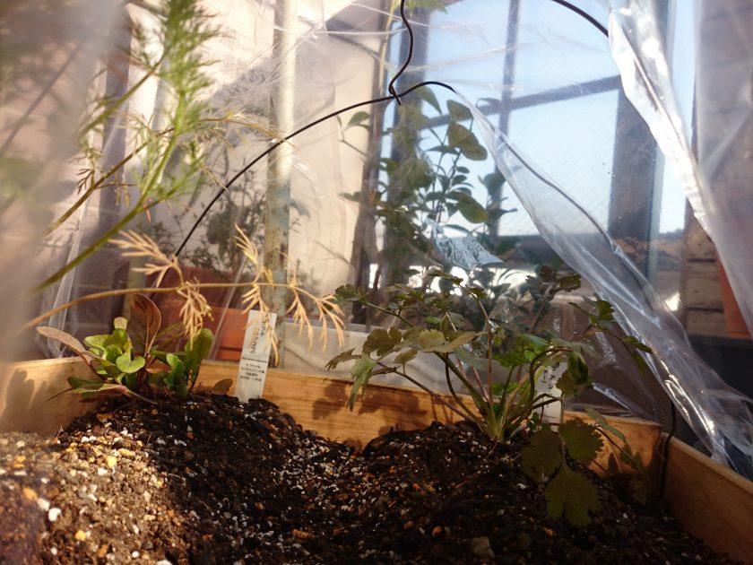 ベランダガーデニング「インテリアパレットをプランターにリメイクして箱庭菜園!」<小松家>