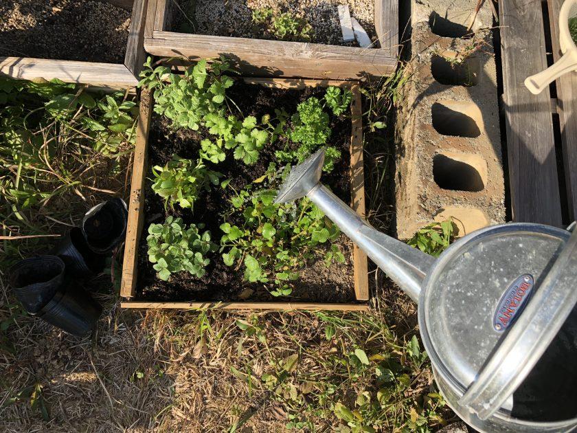お料理やサラダに使えるハーブをいろいろ植えました<小松家>