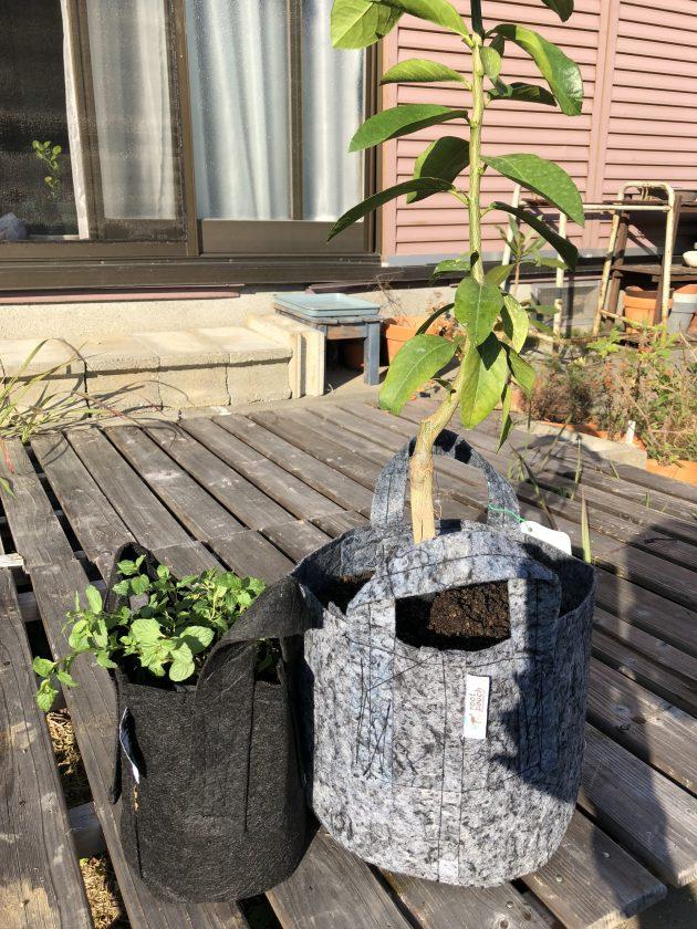 気になっていた「ルーツポーチ」に植物を植えてみました<小松家>