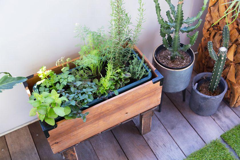 ハーブ苗をプランターに寄せ植えして、家庭菜園を楽しむ