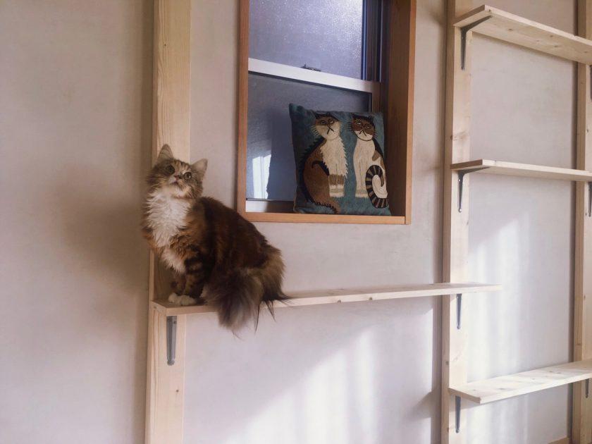 壁面を傷つけないお手軽DIYで、あっという間にキャットウォークが完成!
